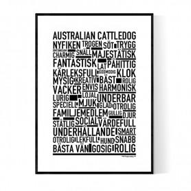 Australian Cattledog Poster