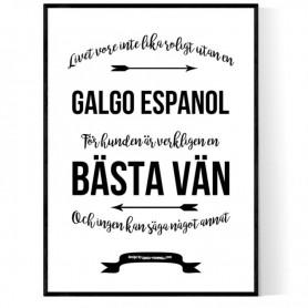 Livet Med Galgo Espanol Poster
