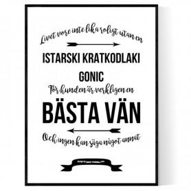 Livet Med Istarski Kratkodlaki Gonic Poster