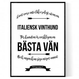 Livet Med Italiensk Vinthund Poster