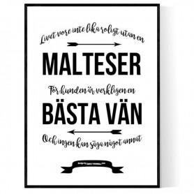 Livet Med Malteser Poster