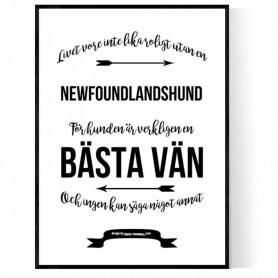 Livet Med Newfoundlandshund Poster