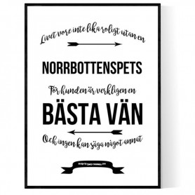 Livet Med Norrbottenspets Poster