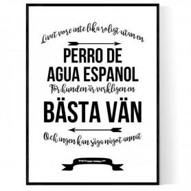 Livet Med Perro De Agua Espanol Poster
