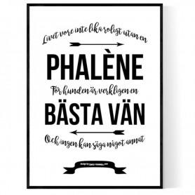 Livet Med Phalène Poster