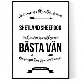 Livet Med Shetland Sheepdog Poster