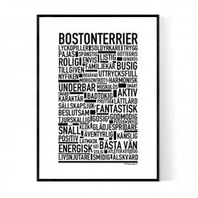 Bostonterrier Poster