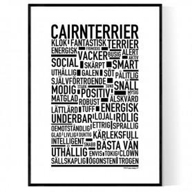 Cairnterrier Poster