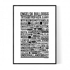 Engelsk Bulldogg Poster