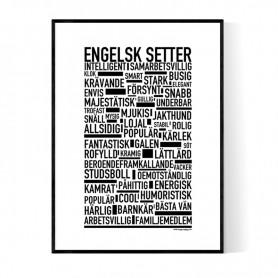 Engelsk Setter Poster