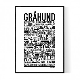 Gråhund Poster