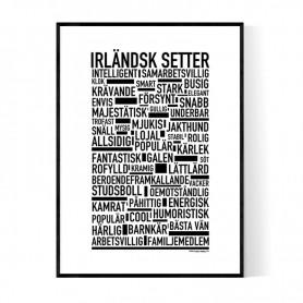 Irländsk Setter Poster