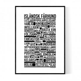 Isländsk Fårhund Poster