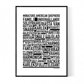Miniature American Shepherd Poster