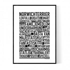 Norwichterrier Poster