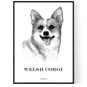 Welsh Corgi Portrait