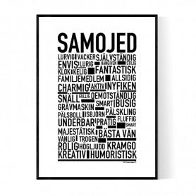 Samojed Poster