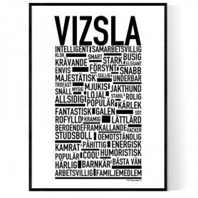 Vizsla Poster