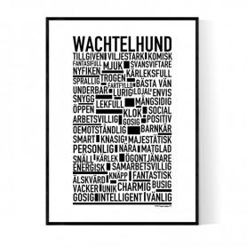 Wachtelhund Poster