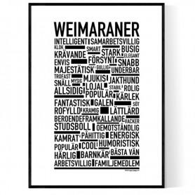 Weimaraner Poster