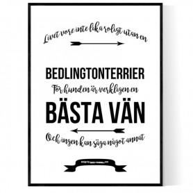 Livet Med Bedlingtonterrier Poster