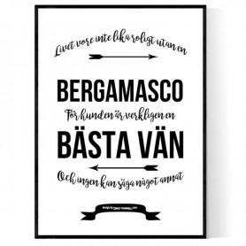 Livet Med Bergamasco Poster