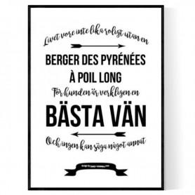Livet Med Berger Des Pyrénées à Poil Long Poster