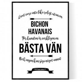 Livet Med Bichon Havanais Poster