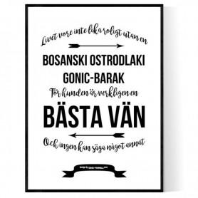 Livet Med Bosanski Ostrodlaki Gonic-Barak Poster