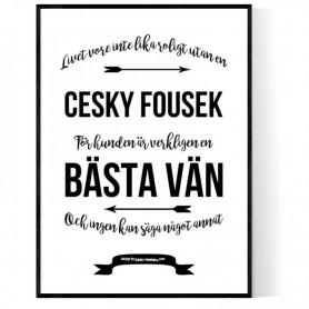 Livet Med Cesky Fousek Poster